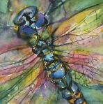 <h5>Dragonfly</h5>