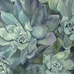 <h5>Succulents, 12x12, giclee print available</h5>